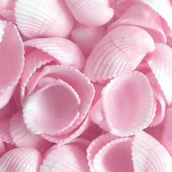 kochylia-clam-rose