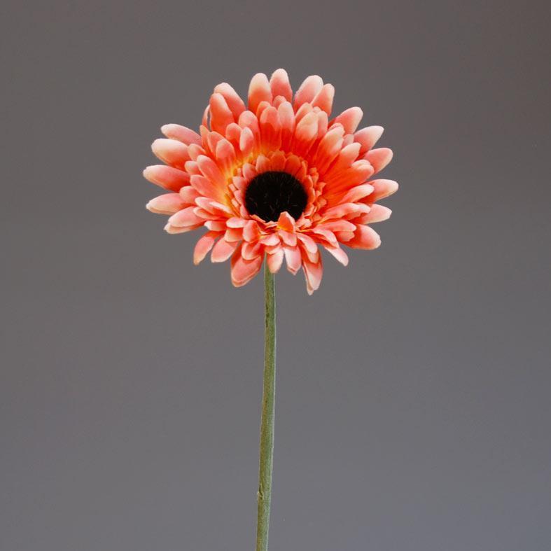zermpera-roz