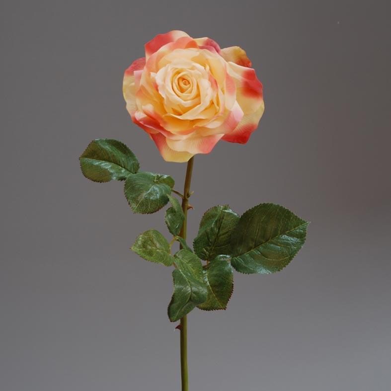rose-holland-pink