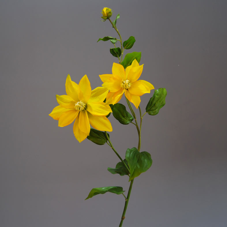 clematis-yellow