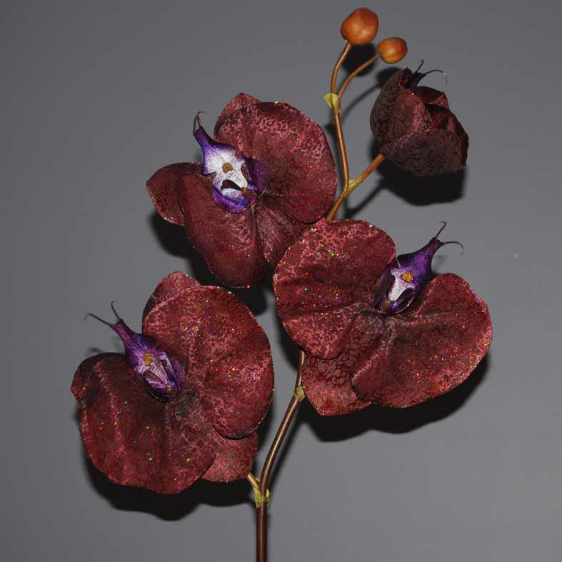 orchidea-mpornto-90cm