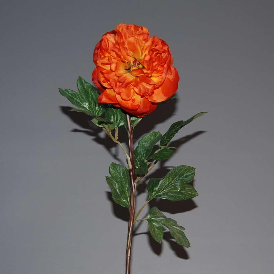 peonia-portokali-80cm