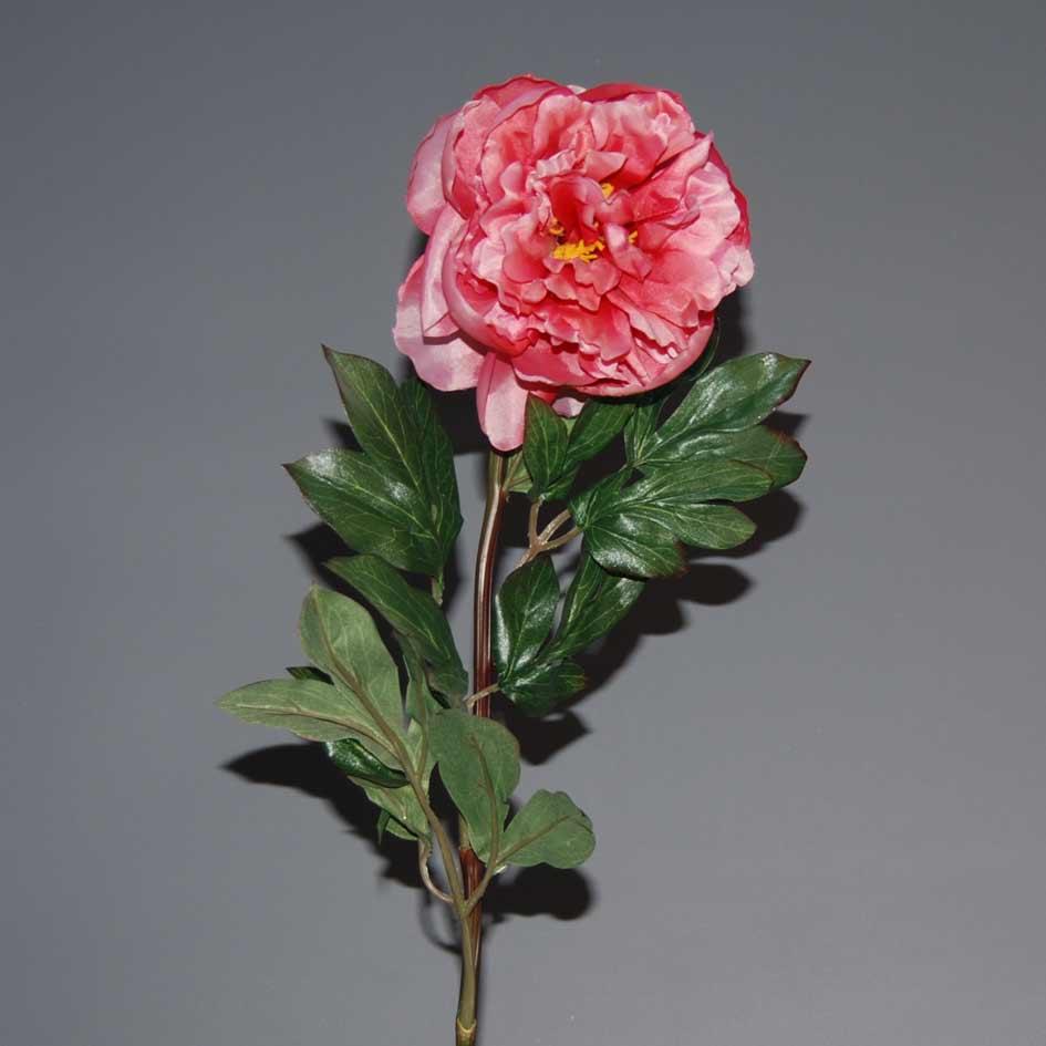 peonia-red-pink