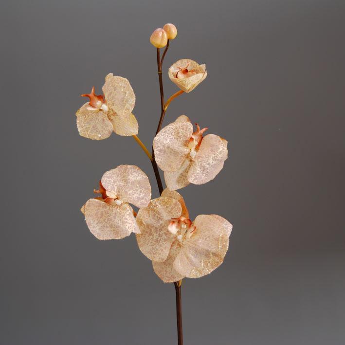 orchidea-falenopsis-somon-me-5-anthi